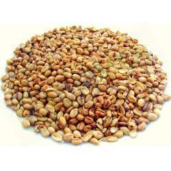 Ukwa Roasted 170 g