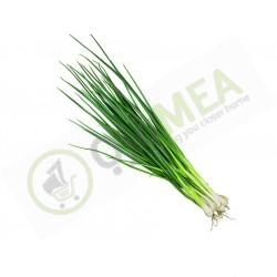 Spring Onions (bundle)