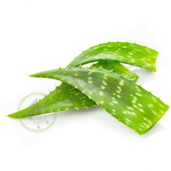Aloe Vera Leaves (3 pieces)