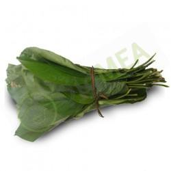 Moi Moi Leaf (per leaf)