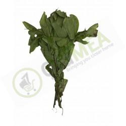 Oha Leaf bundle